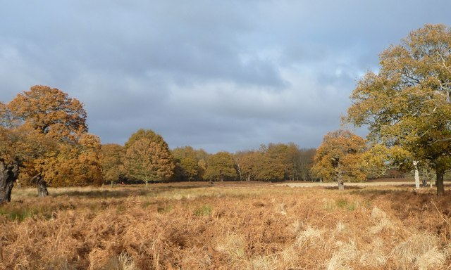 Late autumn, Richmond Park