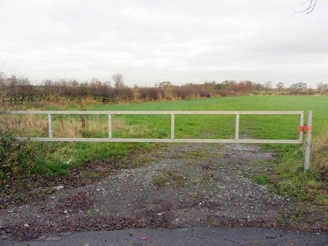 Hedgerow east of Black Callerton
