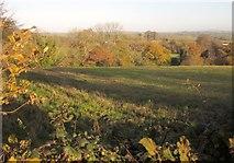 SX3358 : Field near Trerulefoot by Derek Harper