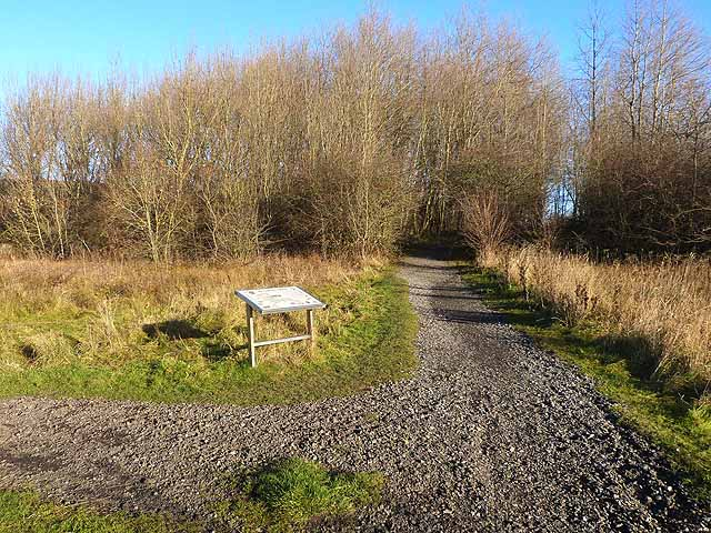 Path junction in Wallsend Dene
