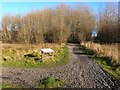 NZ3067 : Path junction in Wallsend Dene by Oliver Dixon