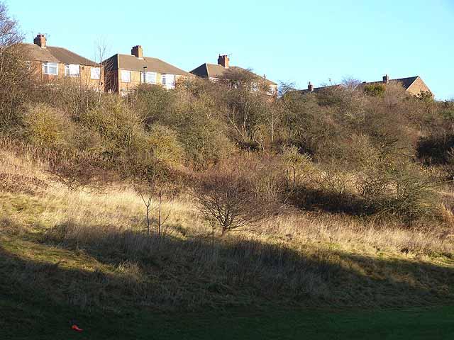 Houses above Wallsend Dene