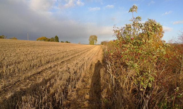 Footpath beside field boundary
