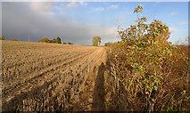 NO1134 : Footpath beside field boundary by Rob Burke