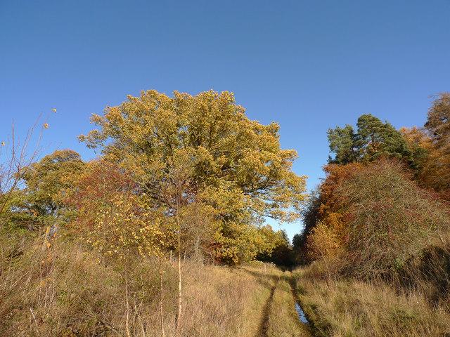 Disused railway line near Ballathie