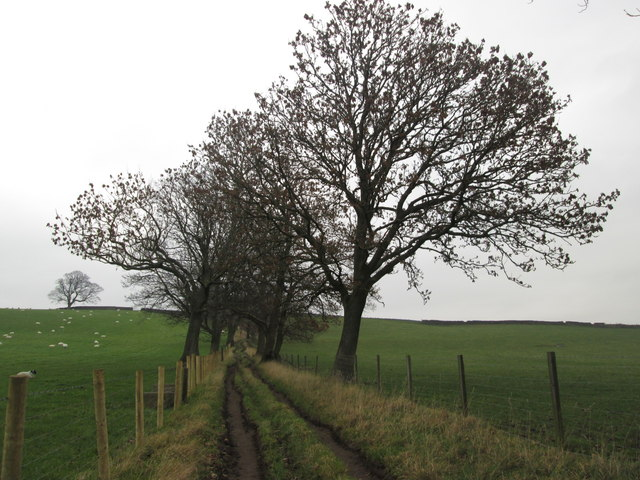Lane towards High Lathe