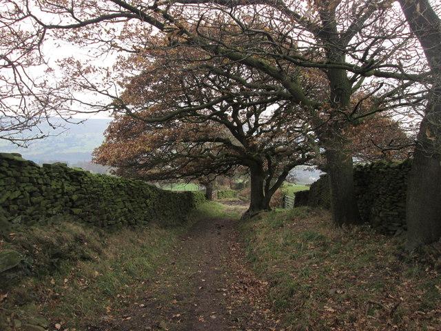 Lane near High Lathe