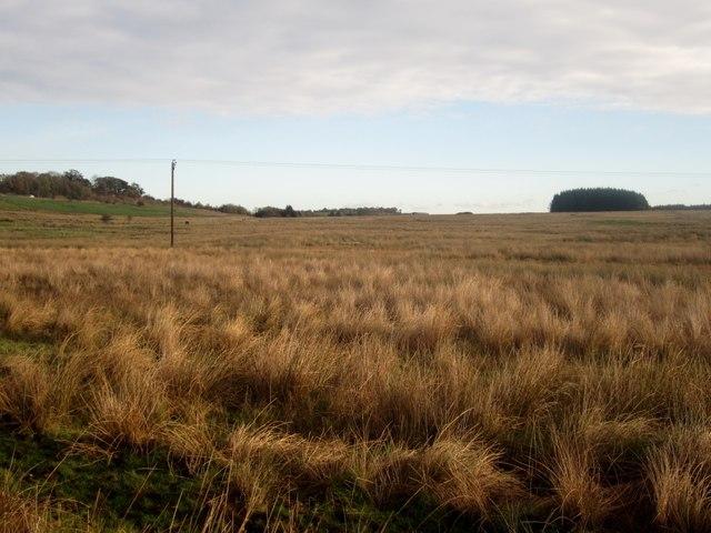 Rough grassland near Troutbeck