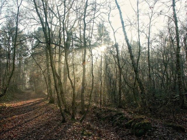 Pine Woods, Woodhall Spa