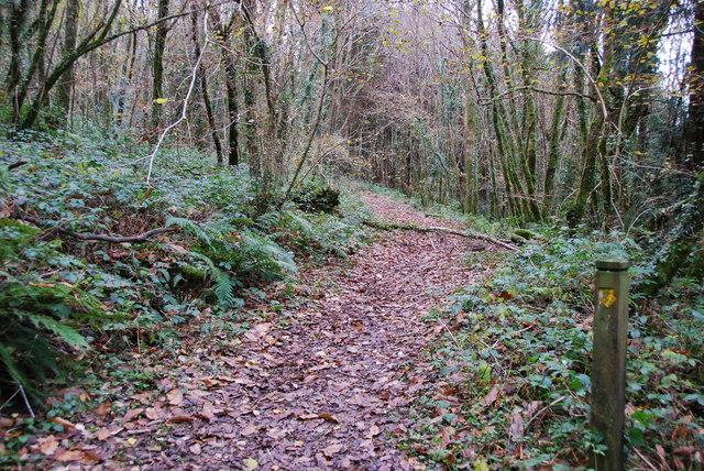 Path through Bake Wood