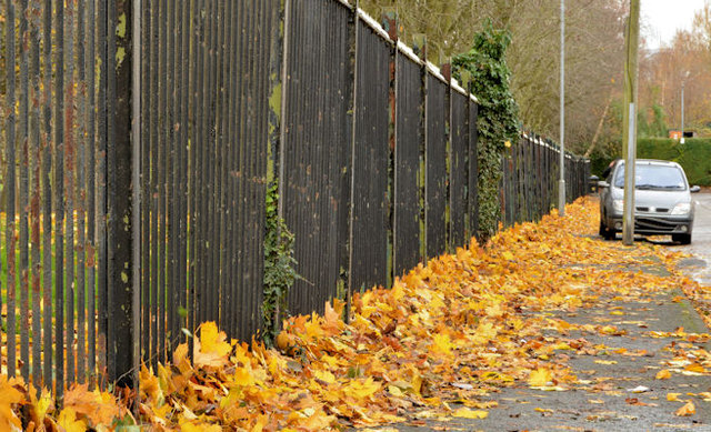 Autumn leaves, Orangefield, Belfast (1)