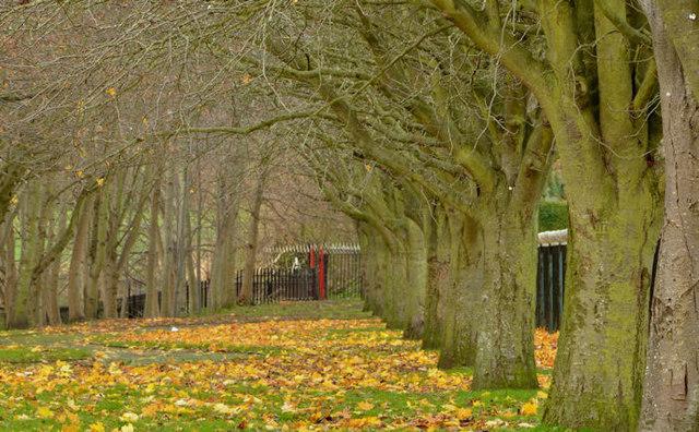 Autumn leaves, Orangefield, Belfast (2)