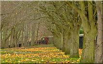 J3673 : Autumn leaves, Orangefield, Belfast (2) by Albert Bridge