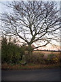 SP9948 : Triangulation Point on Spring Lane by Philip Jeffrey