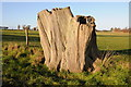 SO6661 : Old tree trunk by Philip Halling
