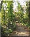 SX3555 : Lane approaching Tredis by Derek Harper
