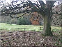 SK3463 : Woods and fields from Marsh Green Kelstedge by stuart dart
