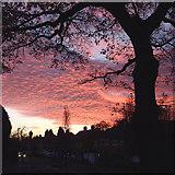 SO9096 : Sunset over Buckingham Road in Penn, Wolverhampton by Roger  Kidd