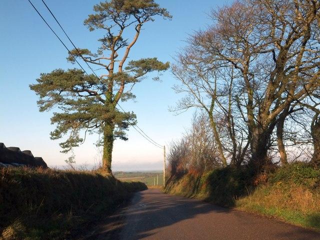 Trees and hedgebanks at Cadbury Barton