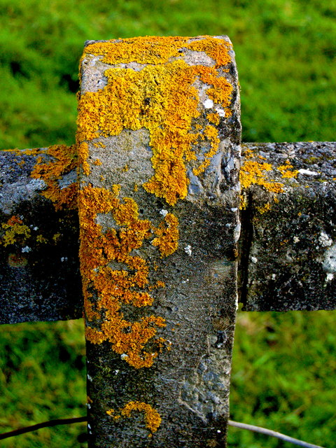 Cliffs of Moher - Concrete Fence Post with Goldish/Yellowish Deposits or Growths