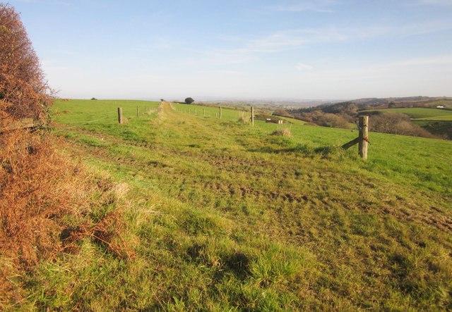 Cow track near Carracawn Farm