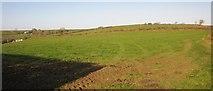 SX3257 : Field by Carracawn Cross by Derek Harper
