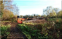SO8475 : Looking at Sports Field from boardwalk in Spennells Valley Nature Reserve, Spennells, Kidderminster by P L Chadwick