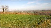 SX3257 : Field above Middledown Wood by Derek Harper