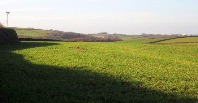 Field near Bake