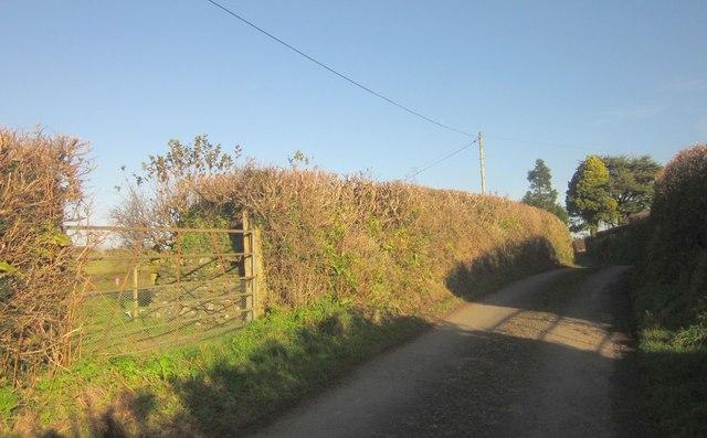 Lane at Penquite