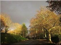 SX7962 : Trees, Dartington by Derek Harper