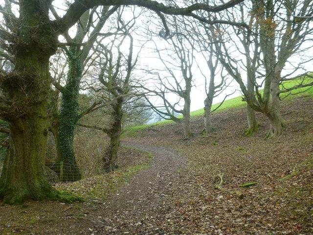 Clwydian Way contours through woodland west of Moel Arthur