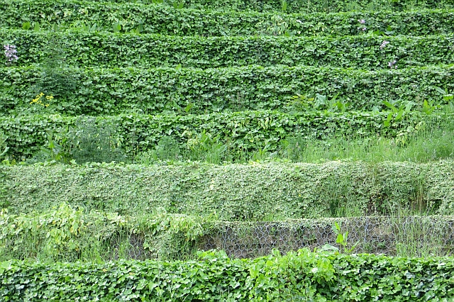 Terracing, The Sage