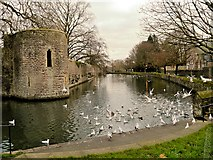 ST5545 : Moat and Gatehouse, The Bishops Palace by David Dixon