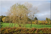 TQ1684 : Sudbury Golf Course by N Chadwick