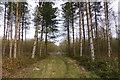 SK9423 : Woodland track by Bob Harvey