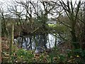 SJ8061 : Tree-lined pond, Moss Mere by Christine Johnstone