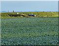 TF4549 : Farmland inside the sea bank by Mat Fascione