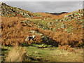NY3305 : Herdwick sheep on Huntingstile Crag by Graham Robson