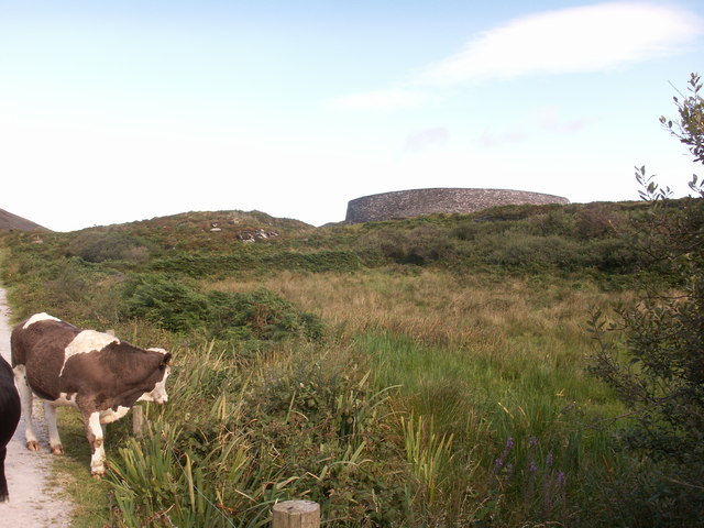 Cows on the track to Cahergal Stone Fort