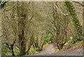 J3976 : Steep path, Redburn, Holywood by Albert Bridge