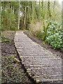 NT4727 : Log Pathway by Adam D Hope