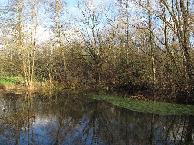 Trees around a pond near Little Brick Kiln Wood
