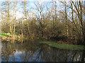TQ5682 : Trees around a pond near Little Brick Kiln Wood by Roger Jones