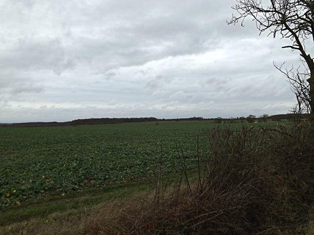 Farmland opposite Leycourt Farm