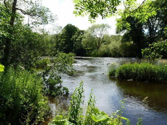 River Wear at Rainton Park Woods