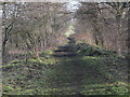NY9173 : Trackbed of the former Border Counties line east of Barrasford station by Mike Quinn