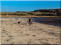 NX4746 : Walking the dogs at Garlieston by Andy Farrington