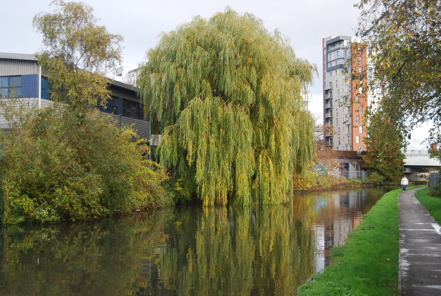 Weeping Willow, Grand Union Canal