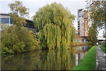 TQ1883 : Weeping Willow, Grand Union Canal by N Chadwick